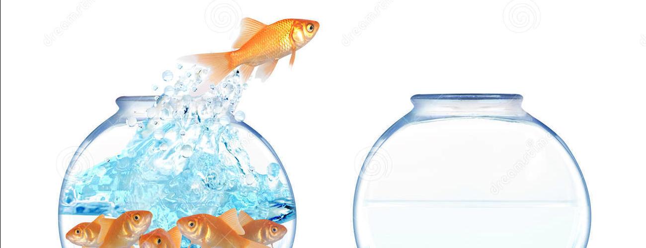Glückliche Goldfische…